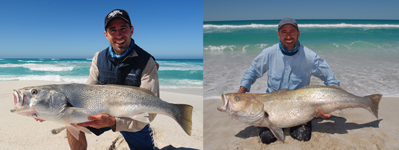 Mulloway In The Surf