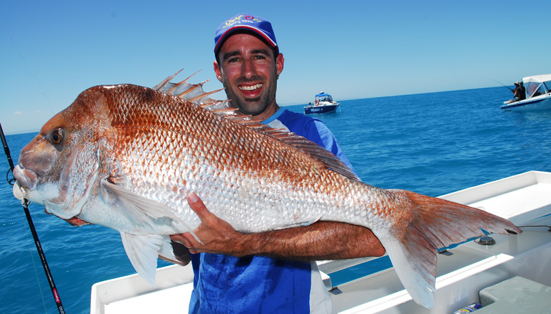 oversized snapper tips